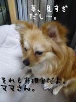20080116_32_2