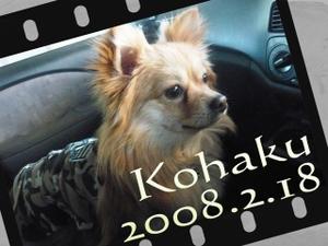 Kohaku2008218_2