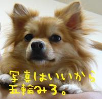 P11206802_2