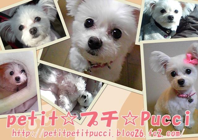 Petit_petit_pucci2