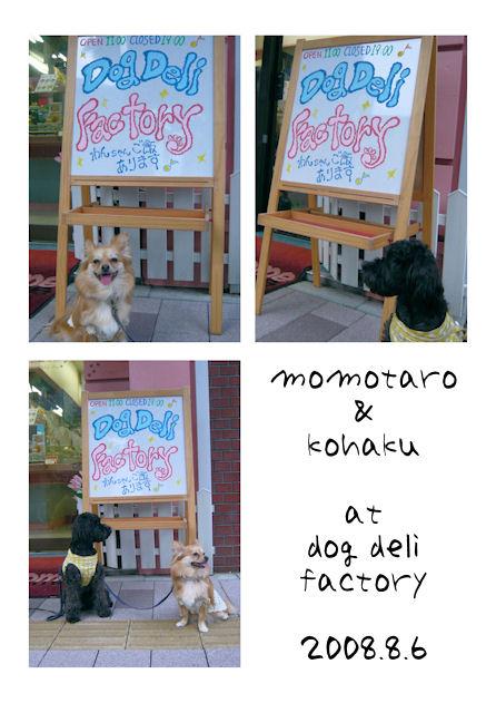 Dog_deli_mae2