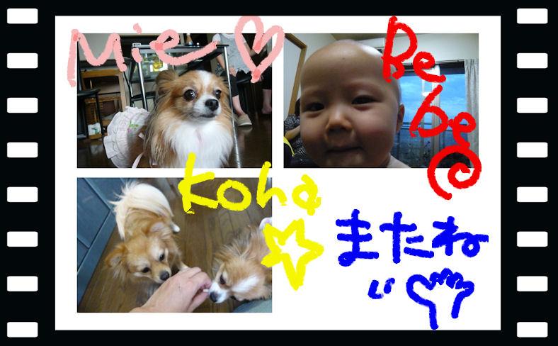 Bebe_mie_koha_000_2