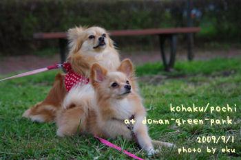 Kohapochi2