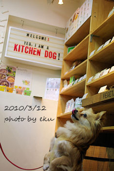 Kitchen_dog
