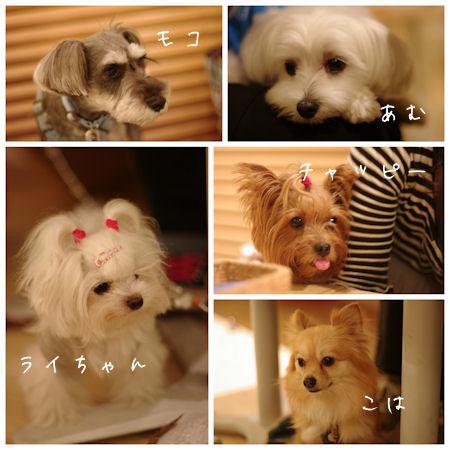 Dog_garden_cafe