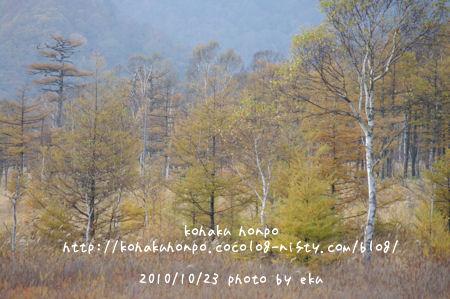 Senjo_3