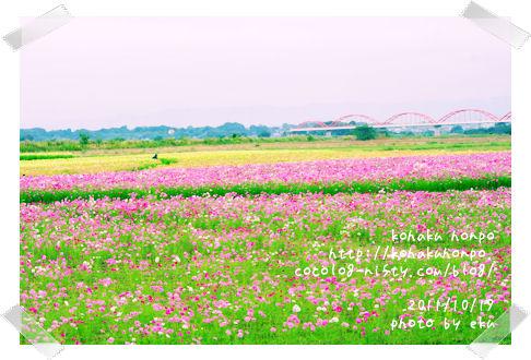 Kosumosu10_2