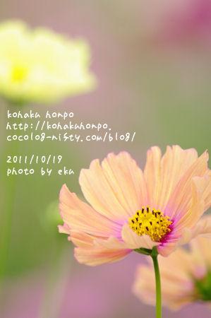 Kosumosu12