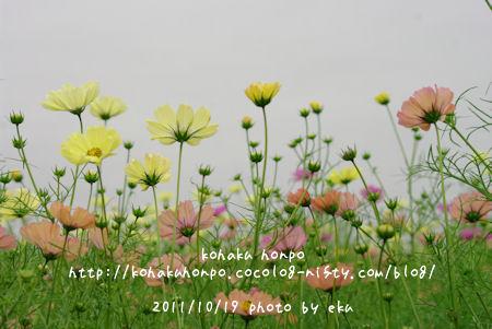 Kosumosu13