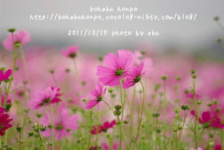 Kosumosu15