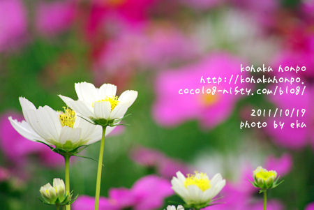 Kosumosu3_3