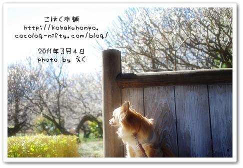 Nozoku