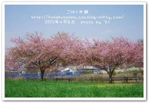Sakura_6