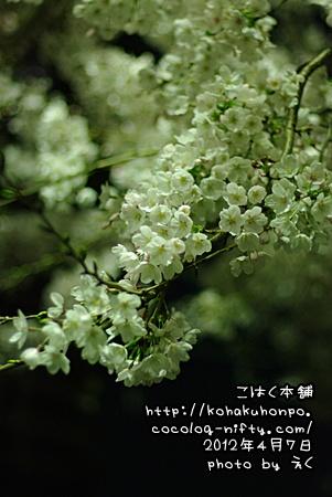 Yozakura3
