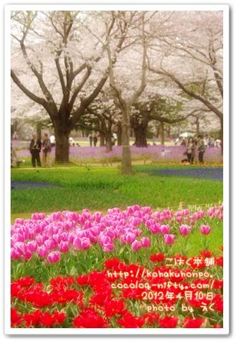 Tulip_2