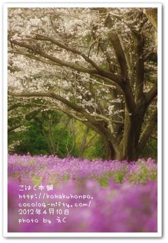 Murasaki_2