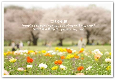 Sakurapopy_2