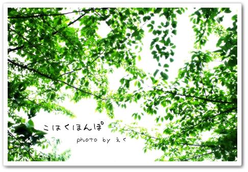 Midori_5