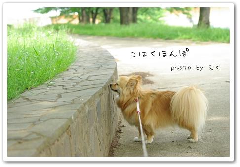 Kininaru_3